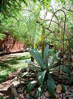 Jardim em Trancoso tem jeito de bosque com espécies organizadas