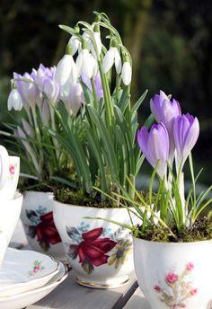 Snowdrop & Crocus Teacups