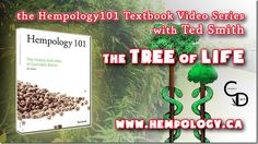Cannabis and The Tree of Life http://cannabisdigest.ca/cannabis-tree-life-hempology-101-textbook-video/ #CannaDigest #Hempology101 #420 #Cannabis #WeedNews  #CannaCommunity #CannaScience #CannaNews #AlternativeNews #CannaLove #420Stuff