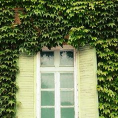 Вертикальное озеленение это благоустройство и озеленение Вашего участка с помощью вьющихся растений, деревьев и не только. Обычно таким растениям придается специальная форма. Самое популярное растение которое участвует в составлении так называемой вертикальной композиции это лианы. Лианы прежде всего хороши тем, что они пластичны, не занимают для своего развития и роста дополнительной территории.