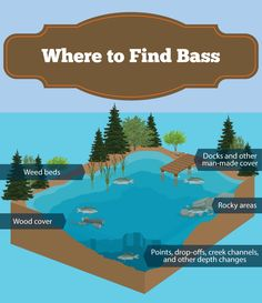 Read our techniques for catching bass with a fly rod. Find out where to fish for bass, how to find them in a lake, pond, or river, and what to feed them. Bass Fishing Tips, Fishing Rigs, Best Fishing, Fishing Videos, Magnet Fishing, Fishing Pliers, Fishing Basics, Fishing Tackle, Fishing Games