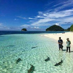 25 Best Indonesia Tourism Objects for Your Itinerary: Friendly Sharks of Raja Ampat