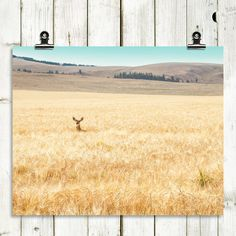 deer wildlife nature large wall art large by MTPhotoJournal (Art & Collectibles, Photography, Color, deer, nature, wildlife, pastels, pastel colors, wheat field, montana, large wall art, large art, large canvas art, large canvas, modern art, calming landscape)