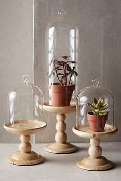 turned baluster cloche #anthrofave