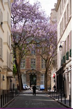 Paris in the Spring ~ Discover romantic getaways, alternative honeymoon ideas and the best honeymoon destinations on Mrs. Purple Rose's blog. Explore here www.mrspurplerose.com