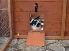 The Rabbit House - Rabbit Sheds Bunny Sheds, Rabbit Shed, Rabbit Run, House Rabbit, Outdoor Rabbit Hutch, Indoor Rabbit, Woodworking Guide, Custom Woodworking, Rabbit Habitat