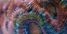 """Wow! #Spectacularly #Amazing!! Slow Life. """"Slow"""" marine animals show their secret life under high magnification. Corals and sponges are very mobile creatures."""