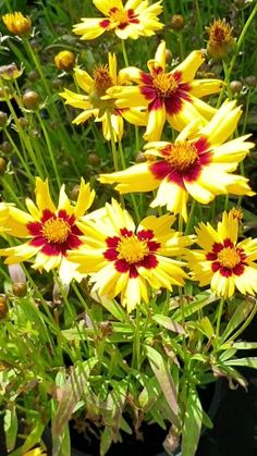 Find out about many different matters of organic gardening. We have listed several aspects on organic gardening that could make you think. Flowers Gif, Flowers Nature, Exotic Flowers, Love Flowers, Beautiful Flowers Images, Flower Images, Flower Pictures, Garden Care, Dwarf Shrubs
