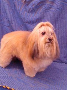 Tessy también pasó por el photo call de nuestra peluquería canina así de guapa