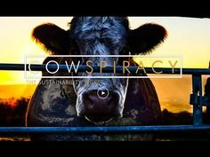 """""""Cowspiracy may be the most important film made to inspire saving the planet."""" ~ Louie Psihoyos, Oscar-Winning Director of """"The Cove""""   http://cowspiracy.com/"""