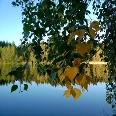 Syksyisen aamun kuulas kauneus❤ #autumn leaves #landscape