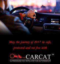 carcat (active_b) on Pinterest
