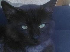 TRESOR Type : Chat domestique poil long Sexe : Mâle Age : Bébé Couleur : Noir Taille : Petit Lieu : Seine-et-Marne - 77 (Île-de-France) Refuge … | Pinteres…
