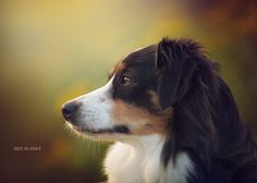 Autumn Dog by G. Blanas on 500px