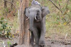 Centre de Conservation des Eléphants de Daklak, Buon Don -perdu dans les hauts plateaux du Vietnam.
