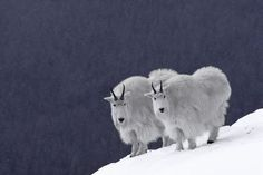 2013年もぶっちぎりで可愛い動物画像:ハムスター速報