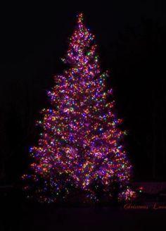 Purple Christmas Tree at Night Purple Christmas Tree, Vintage Ceramic Christmas Tree, Merry Christmas To All, Christmas Scenes, Christmas Time, Christmas Villages, Christmas Wallpapers Tumblr, Cute Christmas Wallpaper, Holiday Wallpaper