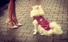 Look forward for our new autumn collection ☺️  Dog outfit Doggy outfit Clothes for dog Dog clothes
