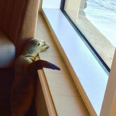 Poor baby was sick & starving, bless it's heart...Feb 6, 2016.The Marine Room, a high-end restaurant in San Diego, had an unusual visitor early one morning. Alas, sardines were not on the menu.