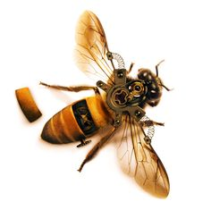 The Inner Workings of Bees