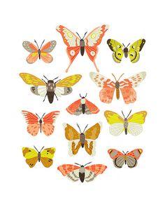 Moth Identification Chart by Alyssa Nassner