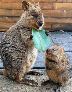 Mother And Baby Animals, Cute Little Animals, Cute Funny Animals, Funny Cats, Beautiful Creatures, Animals Beautiful, Hedgehog Animal, All Nature, Tier Fotos