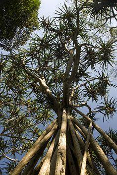 The Royal Botanical Garden Peradeniya Kandy Sri Lanka Sri Lanka, Kandi, Maldives, Botanical Gardens, Beautiful Places, Tours, Explore, Adventure, History
