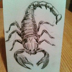 A last minute #sketch of a #scorpion in #pencil  #art #artistic #artoftheday #drawing #drawingaday #sketchbook #sketchaday