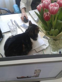 Controlling - office cat