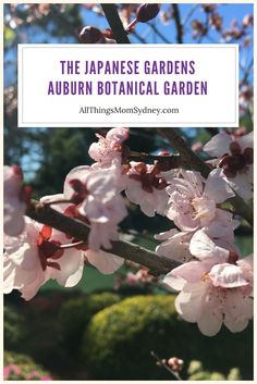 The Japanese Gardens are gorgeous and great for kids to visit too. Japanese Gardens, Zen Gardens, Sydney Gardens, Moon Gate, Big Lake, Japanese Architecture, Japanese Style, Auburn, Waterfalls