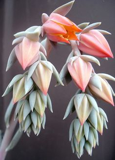 they will grow anywhere and they are succulent plants in the cactus family