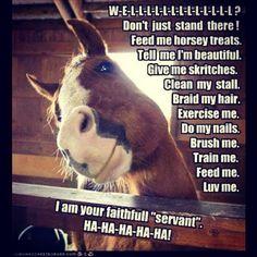 #horseproblems #horses #truth #spoilt