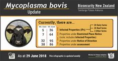 Working together with industry, we aim to eradicate Mycoplasma bovis from New Zealand. Here you'll find: support for farmers compensation information how to contact us. Beef Farming, Notice And Note, Create An Animal, Bacterial Diseases, Farmers, Ministry, New Zealand, Website