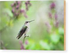 Hummingbird Charm Wood Print by Christina Rollo. All wood prints are professionally printed, packaged, and shipped within 3 - 4 business days and delivered ready-to-hang on your wall. Choose from multiple sizes and mounting options. Hummingbird Art, Bird Wall Art, Thing 1, Wood Print, Canvas Art Prints, Fine Art America, Photo Art, Printed, Business