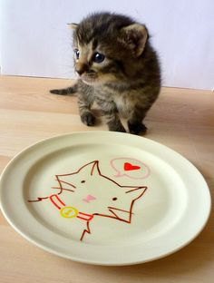 Hand drawn Illustrated Cat Plate. Actual kitten not included.