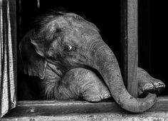 orphan elephant Photo by Julia Cumes -- National Geographic Your Shot