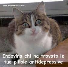 10 Fantastiche Immagini Su Frasi Divertenti Con Gatti Funny