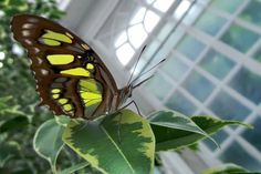 """Photo """"butterfly"""" by Insects, Butterfly, Fruit, Butterflies"""