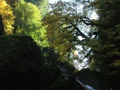 Pacific Tree Climbing Institute: Home