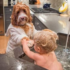 Adorable Book About Boy's Relationship With Foster Dog on Amazing Dog Photo Ideas 5488 Dogs And Kids, Animals For Kids, I Love Dogs, Puppy Love, Baby Animals, Cute Dogs, Funny Animals, Cute Animals, Cutest Animals