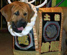 土佐犬 - 写真共有サイト「フォト蔵」