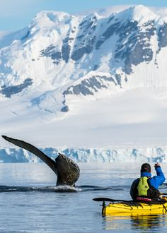From giant elephant seals to super cute penguins, the wildlife in Antarctica is some of the most amazing you will find anywhere in the world! We travelled to the polar destination and caught these amazing experiences with the animals in Antarctica. Add it to your bucket list! Photography Guide, Wildlife Photography, Travel Photography, Travel Pictures, Travel Photos, Elephant Seal, Travel Aesthetic, Marine Life, Seals