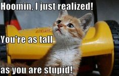 Funny Cats- Human I just realized that you are as tall as you are ...