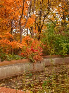 Preparing Your In-Ground and Above-Ground Pool for Autumn