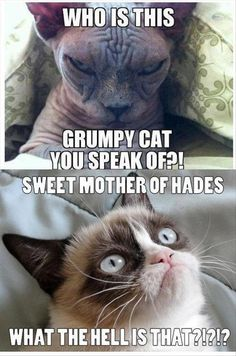 Grumpy cat Memes for kids are so funny.If you read it once then you want to read again and again. lol These Grumpy cat Memes for kids are so funny. Read This Best 25 Grumpy Cat Memes For Kids Funny Grumpy Cat Memes, Funny Animal Memes, Funny Animals, Funny Memes, Grumpy Kitty, Funny Dogs, Funny Kittens, Angry Cat Memes, Funny Horses