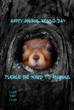 World Days, National Days, Happy Animals, Holiday Traditions