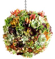 Succulent topiary ball