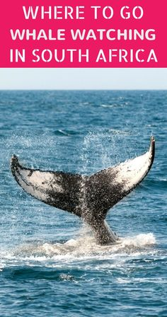 Whale watching in South Africa: from Simons Town to Plettenberg Bay - Whale Watching Boat, Great Whale, Boat Plans, Africa Travel, Sierra Leone, Where To Go, South Africa, Travel Inspiration, Traveling By Yourself