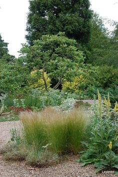 Beth Chatto's dreamy dry garden