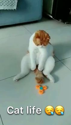 """Pet Fish Toy Length: & & & Material: Plush Type: 6 Types Fish Shapes""""},""""story_pin_data_id"""":null,""""carousel_data"""":null,""""method"""":""""photos Funny Cat Memes, Funny Cat Videos, Wtf Funny, Cats Humor, Chat Funny, Funny Cat Gif, Cute Kitten Videos, Cute Funny Baby Videos, Funniest Jokes"""